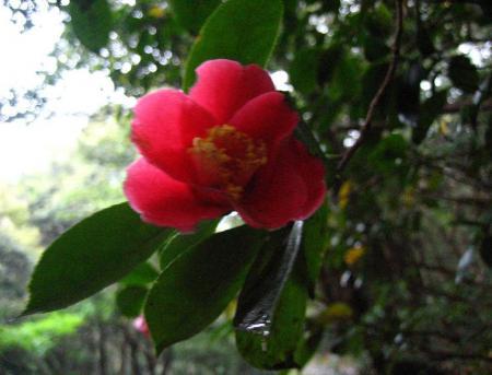 清水の花春雨 080