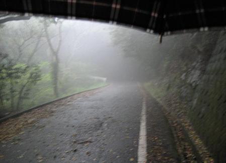 清水の花春雨 084