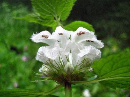 清水の花春雨 086