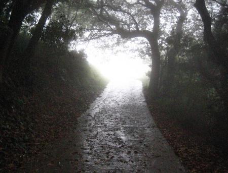 清水の花春雨 096