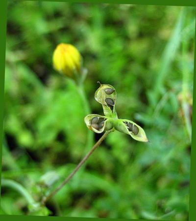 小さな花と虫 039