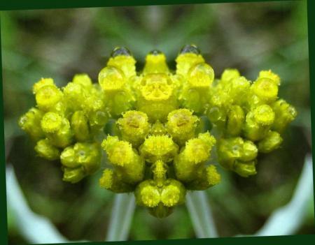 小さな花と虫 027