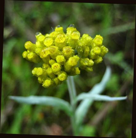 小さな花と虫 028