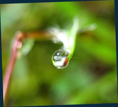 小さな花と虫 024