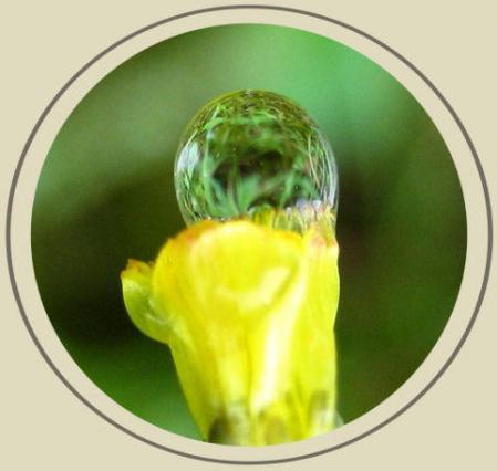 小さな花と虫 016