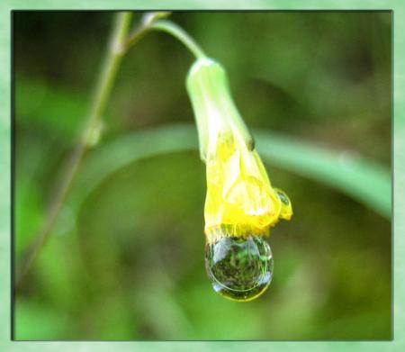 小さな花と虫 017