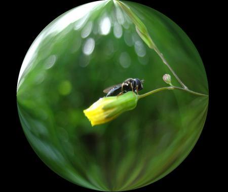 小さな花と虫 036