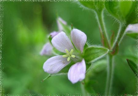 小さな花と虫 048