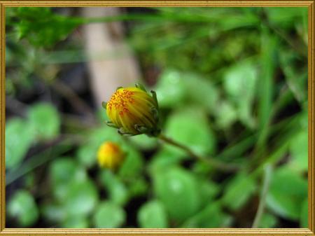 小さな花と虫 040