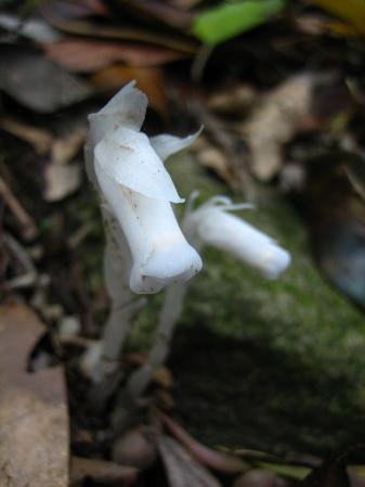 小岱山の花 馬 105