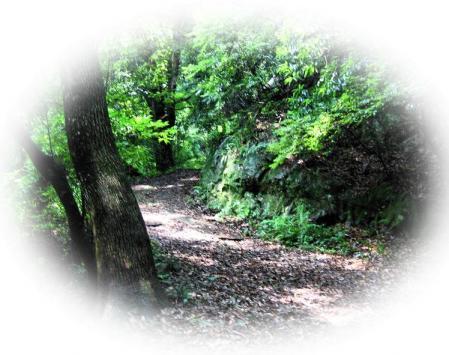 清水の山路 169