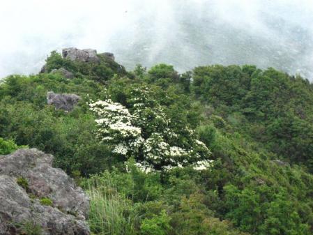 九千部岳の花 106