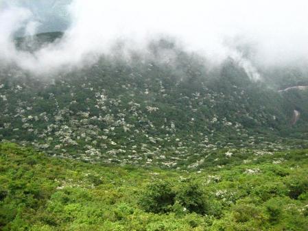 九千部岳の花 104