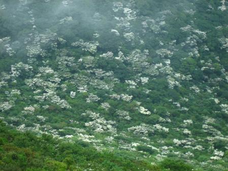 九千部岳の花 103