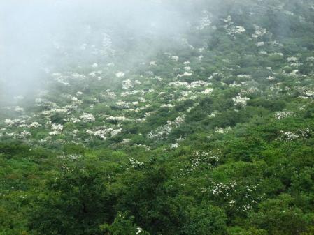 九千部岳の花 101