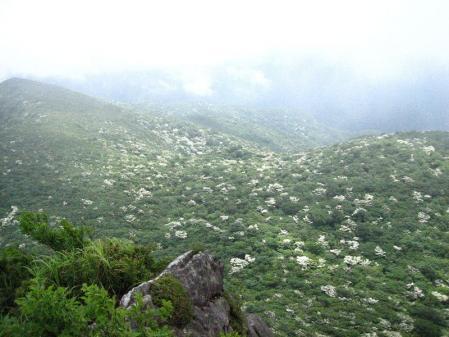 九千部岳の花 152