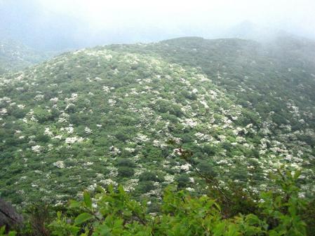 九千部岳の花 151