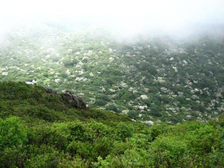 九千部岳の花 143