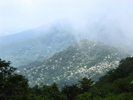 九千部岳の花 139