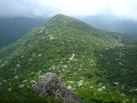 九千部岳の花 159