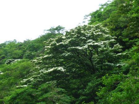 九千部岳の花 176