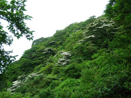 九千部岳の花 175