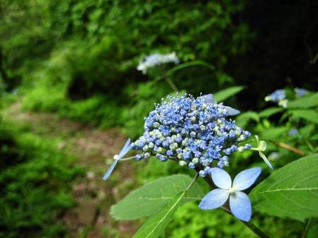 九千部岳の花 191