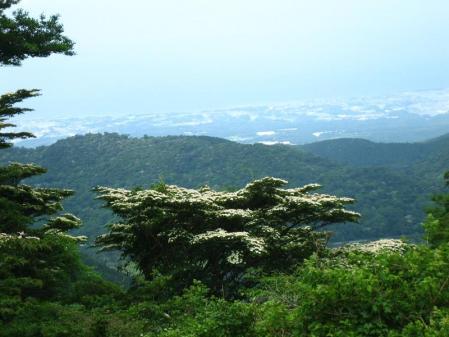 九千部岳の花 179