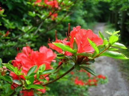 九千部岳の花 231