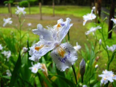 清水の花春雨 028