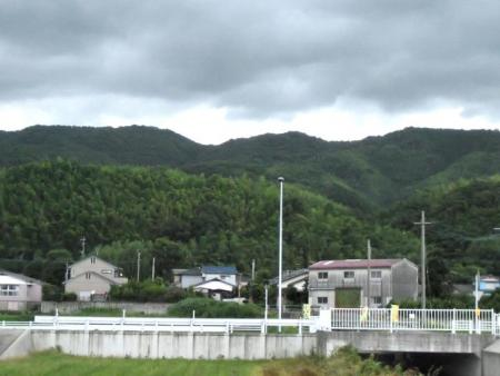 清水山の花 151