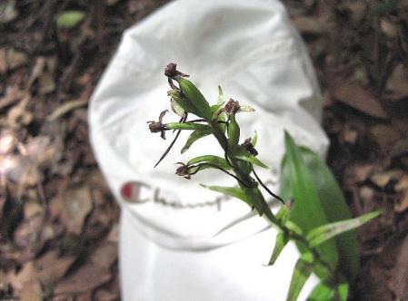 清水山の花 036