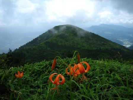 天山の花 141