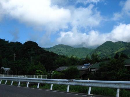 天山の花 雨 002