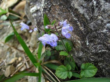 天山の花 雨 164