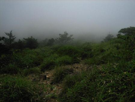 天山の花 雨 169