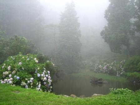 天山の花 雨 213
