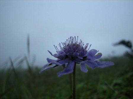 天山の花 雨 200