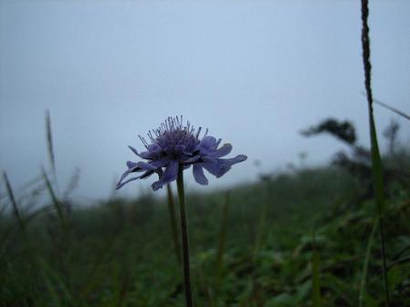 天山の花 雨 199