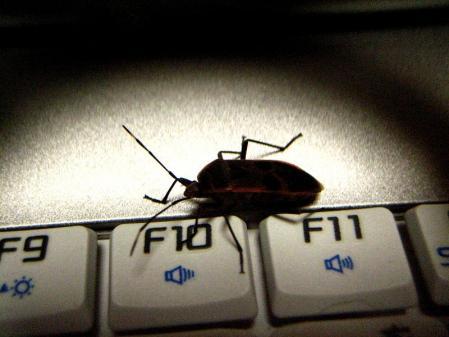 昆虫 074