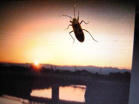 昆虫 068