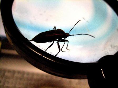 昆虫 051