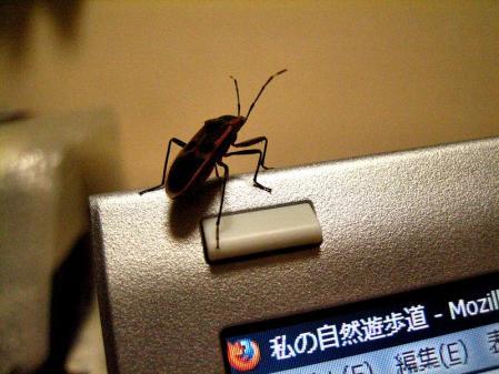昆虫 031