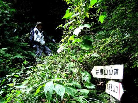 井原山 139