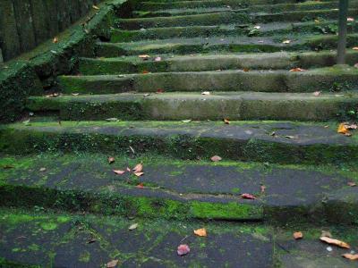 秋雨の清水路 030
