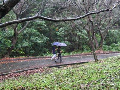 秋雨の清水路 095