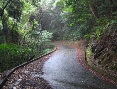 秋雨の清水路 105
