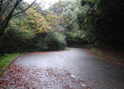 秋雨の清水路 129