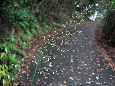 秋雨の清水路 135