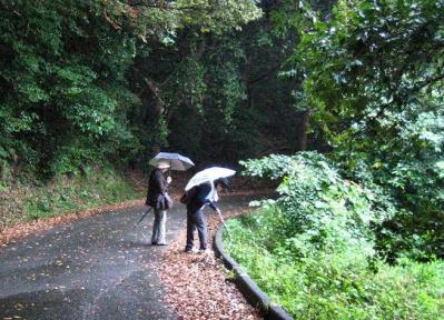 秋雨の清水路 120